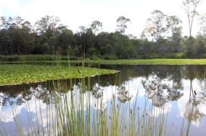 Berinda Wetlands (Browns Plains, Brisbane)